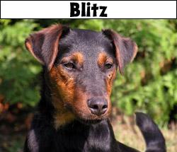 blitzhuv
